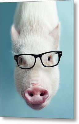 Pickle The Pig I Metal Print by Eli Warren