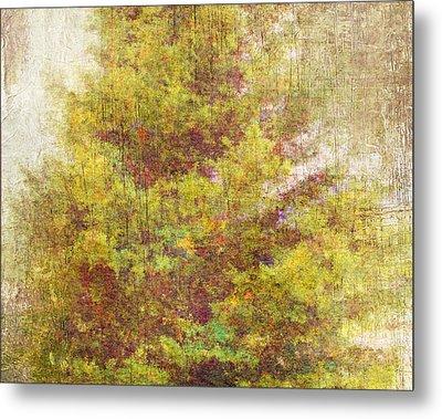 Pinaceae Metal Print by Brett Pfister