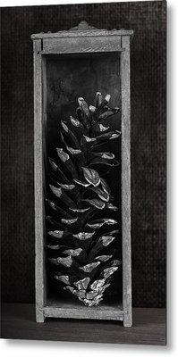 Pine Cone In A Box Still Life Metal Print by Tom Mc Nemar