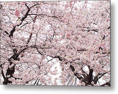 Pink Cherry Blossom Tree Metal Print by Ariane Moshayedi