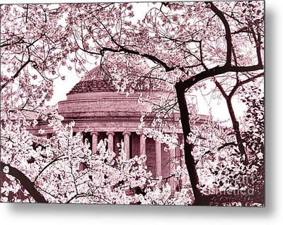 Pink Cherry Trees At The Jefferson Memorial Metal Print by Olivier Le Queinec