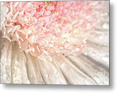 Pink Chrysanthemum With Antique Distress Metal Print by Sandra Cunningham