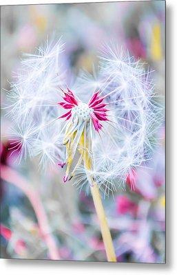 Pink Dandelion Metal Print by Parker Cunningham
