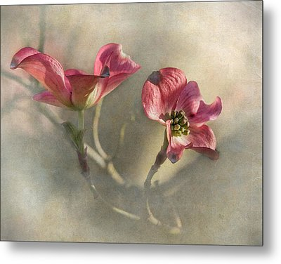 Pink Dogwood Metal Print by Angie Vogel