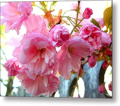Pink Flowers Metal Print by D R TeesT