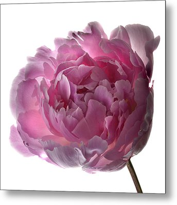 Pink Perfection Metal Print by Terence Davis