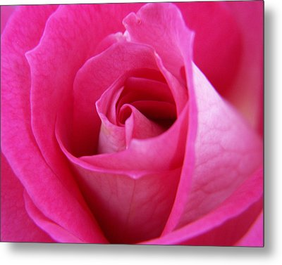 Pink Rose Metal Print by Amy Fose
