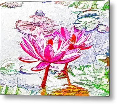 Pink Water Lily Flowers Blooming On Pond Metal Print by Lanjee Chee