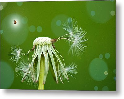 Pixie Wishes Metal Print by Lisa Knechtel
