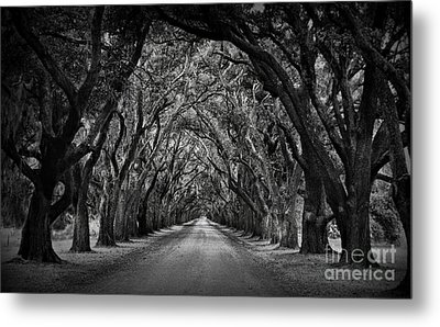 Plantation Oak Alley Metal Print by Perry Webster