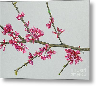 Plum Blossom Metal Print by Glenda Zuckerman