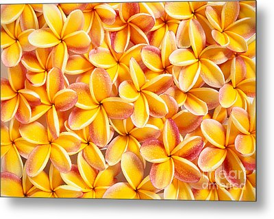 Plumeria Flowers Metal Print by Kyle Rothenborg - Printscapes