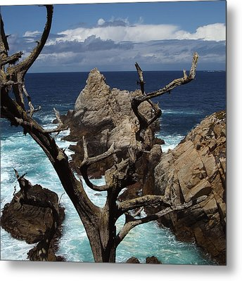 Point Lobos Rocks And Branches Metal Print by Charlene Mitchell