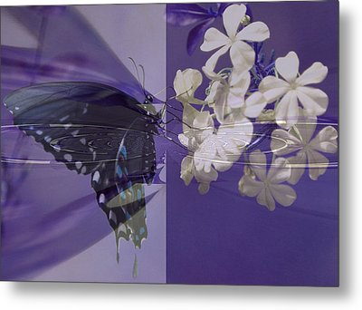 Polar Attraction Metal Print by Rose  Hill