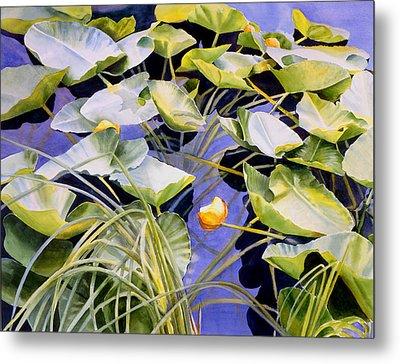 Pond Lilies Metal Print by Sharon Freeman