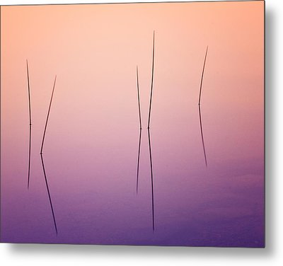 Pond Reeds - Abstract Metal Print by Thomas Schoeller