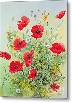 Poppies And Mayweed Metal Print by John Gubbins