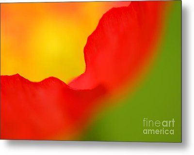Poppy Metal Print by Silke Magino