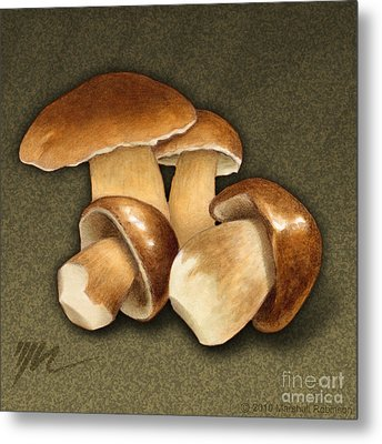 Porcini Mushrooms Metal Print by Marshall Robinson