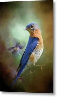 Portrait Of A Bluebird Metal Print by Jai Johnson