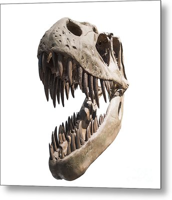 Portrait Of A Dinosaur Skeleton, Isolated On Pure White. Metal Print by Caio Caldas