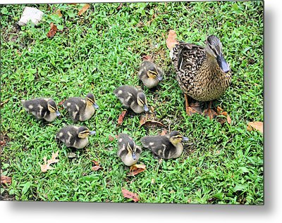Precious Seven Metal Print by Jan Amiss Photography