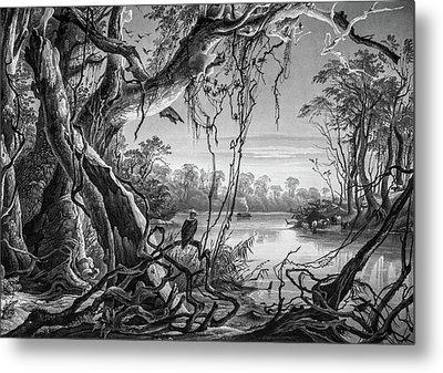 Preditor In Paradise Metal Print by Douglas Barnett