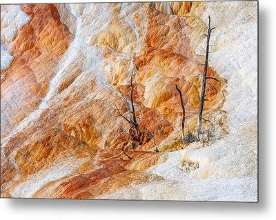 Prehistoric Trees Metal Print by Todd Klassy