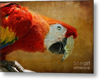 Pretty Boy Metal Print by Lois Bryan