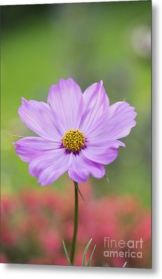 Pretty In Pink Metal Print by Tim Gainey