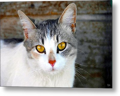Pretty Kitty Metal Print by David Lee Thompson