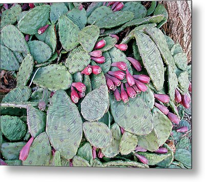 Prickly Pear Cactus Fruits Metal Print by Mother Nature