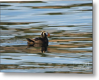 Puffin Reflected Metal Print by Mike Dawson