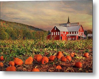 Pumpkin Farm Metal Print by Lori Deiter