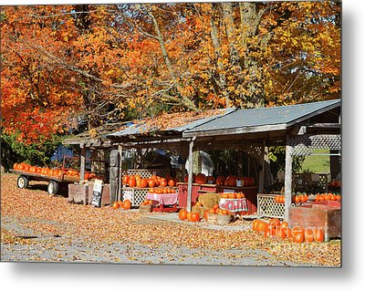 Pumpkins For Sale Metal Print by Louise Heusinkveld