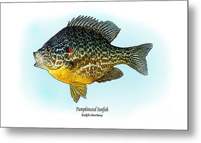 Pumpkinseed Sunfish Metal Print by Ralph Martens