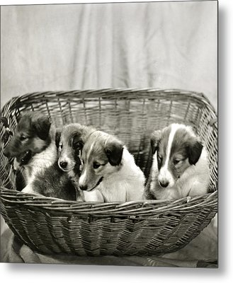 Puppies Of The Past Metal Print by Marilyn Hunt