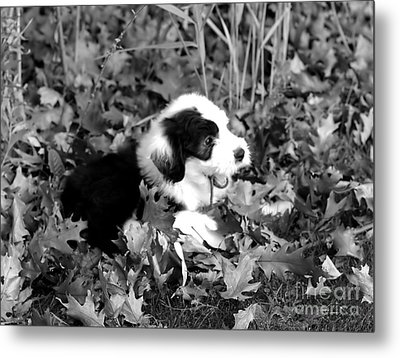Puppy In The Leaves Metal Print by Kathleen Struckle