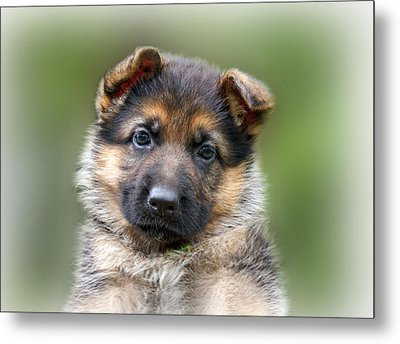 Puppy Portrait Metal Print by Sandy Keeton