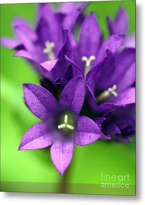 Purple Blooms Metal Print by Amanda Barcon