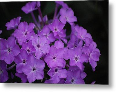 Purple Blossoms Metal Print by David Lane
