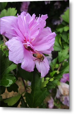 Purple Flower And Friend Metal Print by Guy Ricketts