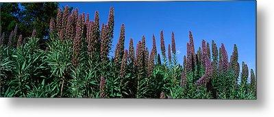 Purple Flowers, Taft Gardens, Ojai Metal Print by Panoramic Images