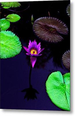 Purple Lily Metal Print by Gary Dean Mercer Clark