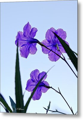 Purple Trio Metal Print by Christopher Holmes