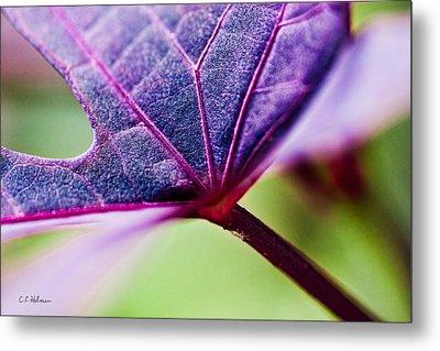 Purple Veins Metal Print by Christopher Holmes