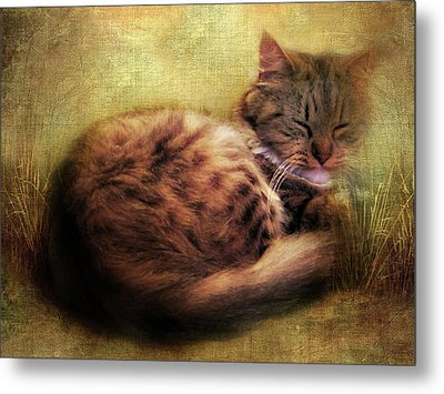 Purrfectly Content Metal Print by Jessica Jenney