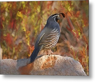 Quail On The Rocks Metal Print by Donna Kennedy