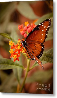 Queen Butterfly On Flowers Metal Print by Ana V  Ramirez