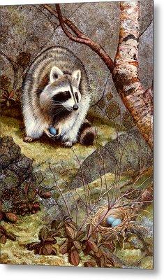 Raccoon Found Treasure  Metal Print by Frank Wilson